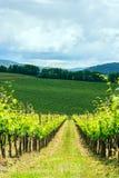 Chiantiweinberglandschaft in Toskana Stockfoto