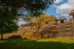 Chiapas, Mexico. Palenque. The pyramid on the background of green tree leaves. Landscape in the ancient city of Maya.  Stock Photo