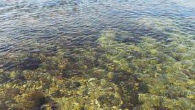 Chiara acqua nel fiume stock footage