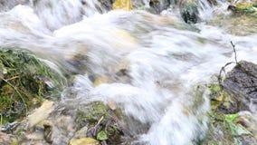 Chiara acqua rapidamente scorrente nell'insenatura fredda bassa della foresta video d archivio