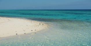 Chiara acqua sull'isola dell'airone Fotografie Stock