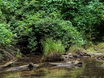 Chiara corrente e vegetazione verde fotografie stock