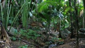 Chiara corrente in Vallée de Mai Nature Reserve video d archivio