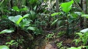 Chiara corrente in Vallée de Mai Nature Reserve archivi video
