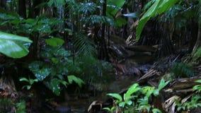 Chiara corrente in Vallee de Mai Nature Reserve stock footage