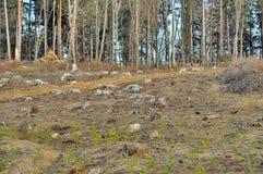 Chiara fine della foresta di taglio su Immagine Stock
