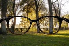 Chiara foresta di visione Fotografia Stock