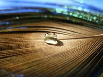 Goccia di acqua su una piuma del pavone fotografia stock