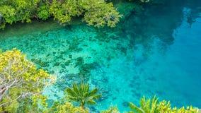 Chiari acqua blu e corallo in mangrovia vicino all'alloggio presso famiglie di Warikaf, baia di Kabui, passaggio Gam Island, Papu Immagini Stock