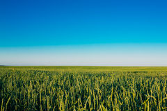 Chiaro cielo blu sopra il campo rurale della campagna con Immagine Stock