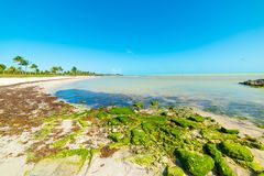 Chiaro cielo sopra la spiaggia di Smathers in Key West immagine stock