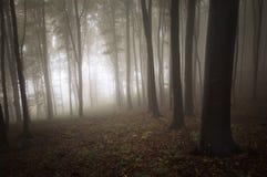 Chiaro entrando in una foresta misteriosa con nebbia immagine stock