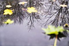 Chiarore degli alberi e delle foglie di autunno in una pozza Immagine Stock