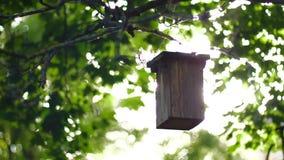 Chiarori dell'alimentatore e del sole dell'uccello con la vecchia lente archivi video