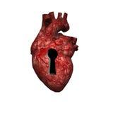 Chiave ad un cuore sano Fotografia Stock