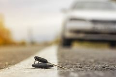 Chiavi perse dell'automobile sugli aghi caduti dell'abete rosso blu bokeh posteriore del fondo della sfuocatura fotografia stock