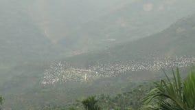 Chiayi Taixing Yellow-headed Heron hovering