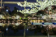Chiba parkerar i aftonen under Hanami royaltyfria bilder