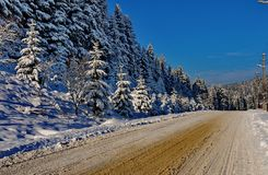 A chic winter landscape of a frosty day. With a rolling road running along beautiful tall firs growing on a slope stock photo