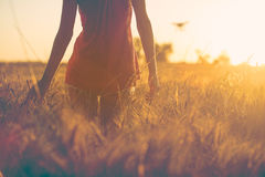 Chica joven atractiva en la puesta del sol en los campos que tocan maíz Imagenes de archivo