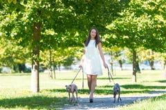 Chica joven con dos galgos en el parque Foto de archivo libre de regalías