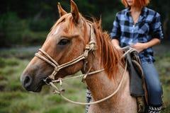 Chica joven en caballo en bosque fotos de archivo
