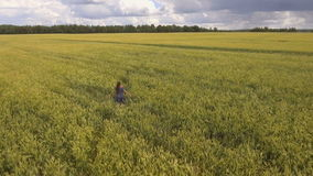 Chica joven en el campo de trigo Vídeo aéreo almacen de metraje de vídeo