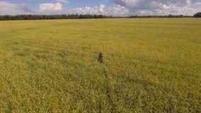 Chica joven en el campo de trigo Vídeo aéreo almacen de video