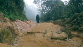 Chica joven en el impermeable que va en el rastro de madera durante viaje Caminar a la mujer con la mochila que camina en bosque  Foto de archivo libre de regalías