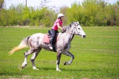Chica joven en un casco que monta un caballo dapple-gris en un campo de hierba Foto de archivo