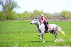 Chica joven en un casco que monta un caballo dapple-gris en un campo de hierba Fotografía de archivo