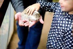 Chica joven feliz con el padre que acaricia el conejo del bebé Fotos de archivo