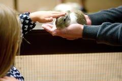 Chica joven feliz con el padre que acaricia el conejo del bebé Imagen de archivo libre de regalías