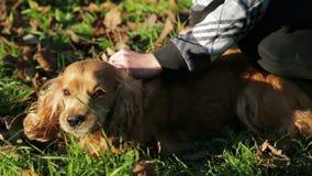 Chica joven feliz que acaricia su perro almacen de metraje de vídeo