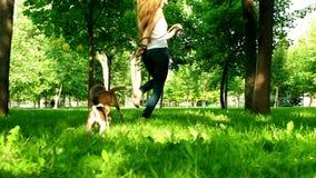 Chica joven feliz que activa con su perro del beagle lento almacen de metraje de vídeo