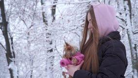 Chica joven linda del retrato con el pelo largo cubierto con una capilla que sostiene un terrier de Yorkshire vestido en suéter d metrajes