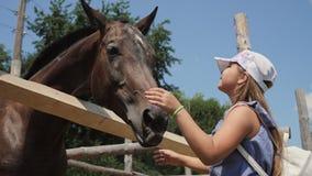Chica joven que alimenta y que toma cuidado del caballo marrón almacen de metraje de vídeo