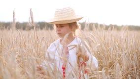 Chica joven que camina en el campo entre los oídos en la puesta del sol almacen de video