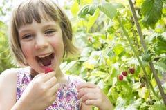 Chica joven que come las frambuesas del jardín Fotografía de archivo libre de regalías