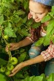 Chica joven que cuida para los tomates Foto de archivo libre de regalías