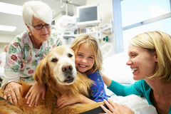 Chica joven que es visitada en hospital por el perro de la terapia Foto de archivo libre de regalías