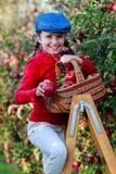 Chica joven que escoge manzanas orgánicas en el Basket.Orchard. Foto de archivo