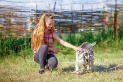 Chica joven que juega con una pequeña cabra del bebé Fotos de archivo