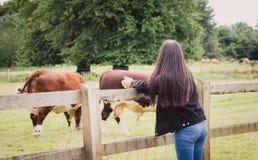 Chica joven que mira las vacas Fotografía de archivo