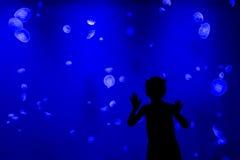 Chica joven que mira medusas Foto de archivo libre de regalías