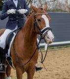 Chica joven que monta un caballo Imágenes de archivo libres de regalías
