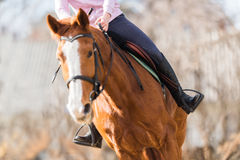Chica joven que monta un caballo Fotografía de archivo