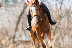 Chica joven que monta un caballo Fotografía de archivo libre de regalías