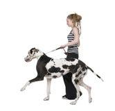 Chica joven que recorre su perro (gran danés 4 años) ha Imagen de archivo libre de regalías