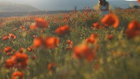 Chica joven que se coloca en campo de las amapolas en la puesta del sol metrajes